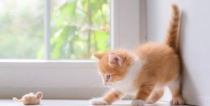 猫の狩猟本能を満たす『とっておきの遊び方』5選