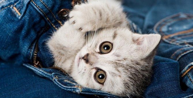 猫がモチーフのブランドをご紹介!皆さんはいくつ知っていますか?