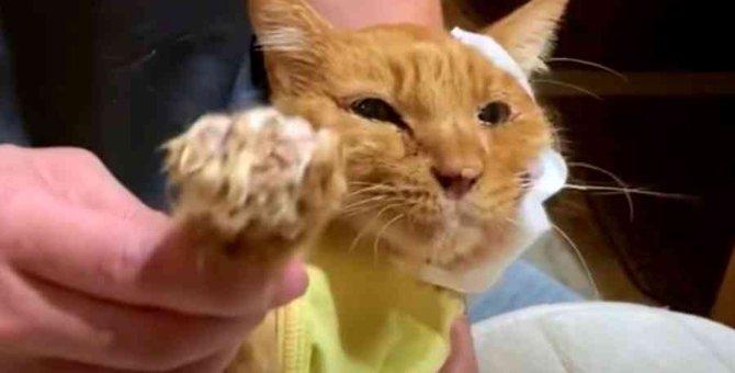 頬がえぐれガリガリに痩せた猫…温かいお家で余生を過ごす No.2