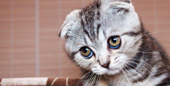 浮気してにゃい?猫が飼い主を詮索している時の行動5つ