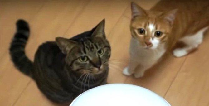 猫じゃらシッターと友情は築ける?初対面のニャンズたち