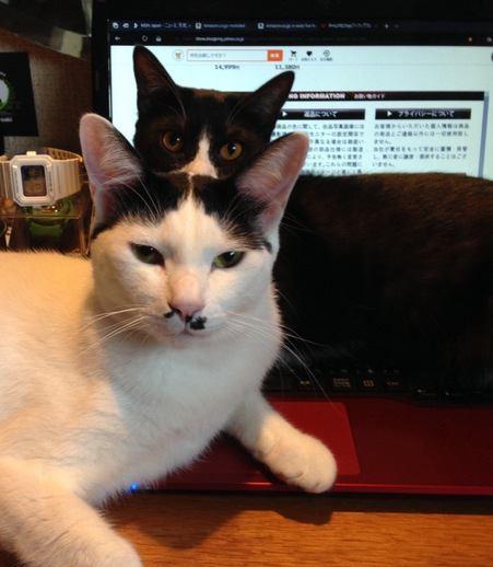 猫が『許しがたい』と感じる飼い主の行動3つ