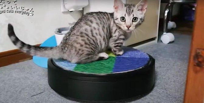 行ったり来たり!ロボット掃除機を乗りこなす子猫!