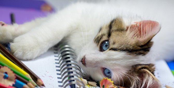 猫の文房具がかわいい!プレゼントや普段使いにもおすすめな商品をご紹介