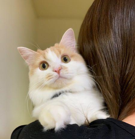 猫が飼い主の肩に乗るときの心理5つ