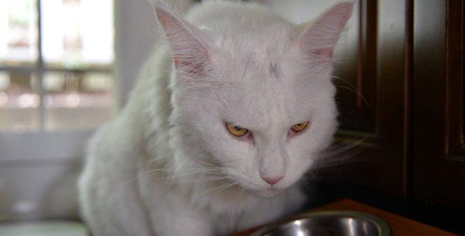 猫のご飯はドライ派?ウェット派?手作り派?良い所悪い所