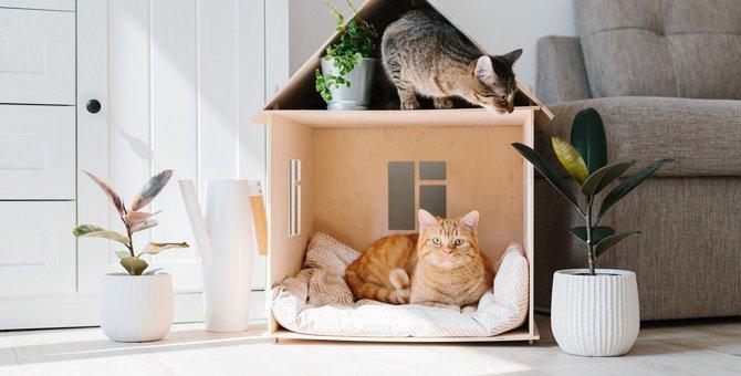 猫の多頭飼いにおける『部屋づくり』のコツ・ポイント5選