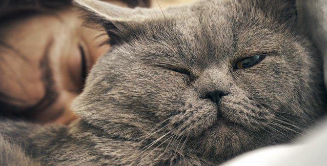 猫が顔の近くで寝る4つの理由と飼い主への信頼度