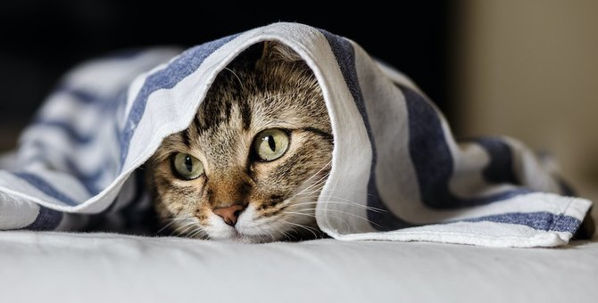 猫との絆を一瞬でダメにしてしまうNG行為4つ