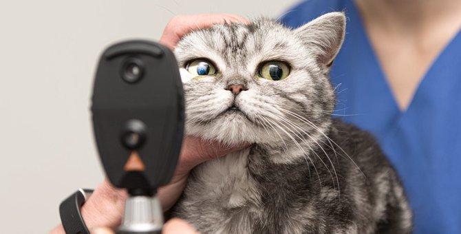 猫も目が悪くなる?視力低下かも知れない5つのサイン!病気の可能性も