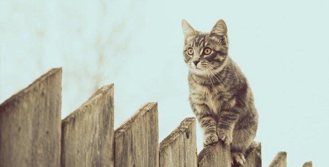 猫用の柵を設置する方法とその使い方