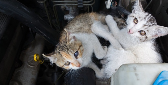 猫バンバンとは?効果や車から出てこない時の対処法