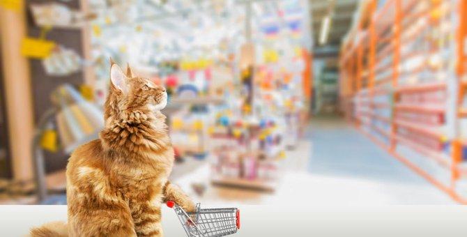 猫の飼い主が注意すべき『買い物アイテム』5つ