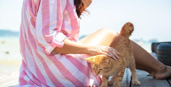 猫が『お尻を高く上げる』ときの気持ち4つ