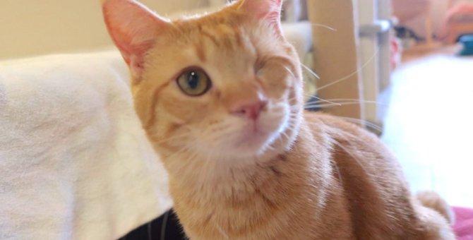 多頭飼育から保護された猫…片目のハンデに負けず元気に成長!