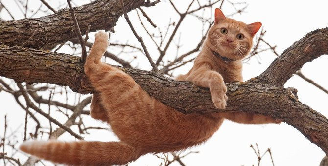 見逃さないで!猫の『助けてサイン』5つ