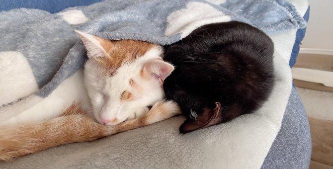 里親募集サイトで出会った猫「小鉄」と「仁」。威嚇から始まった物語