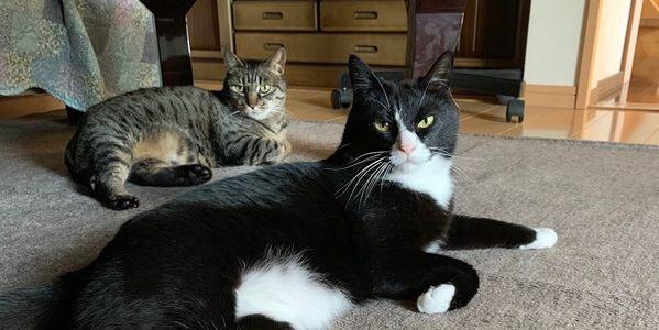 かわいい♡猫同士が仲良くしている画像10連発!