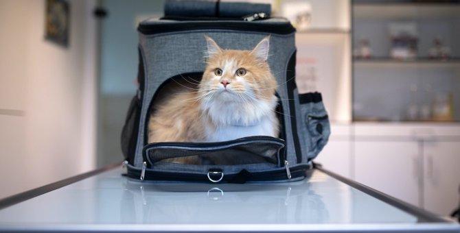 猫を『病院嫌い』にさせてしまう飼い主のダメ行動5つ