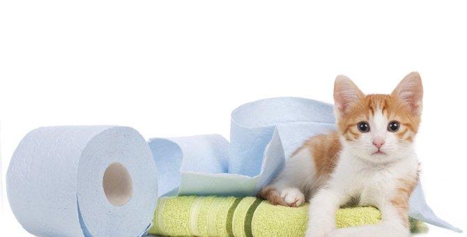 猫の『便秘』は要注意!危険な4つの病気と対処法