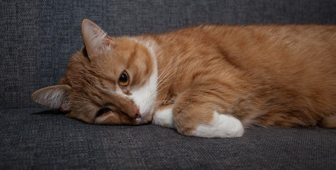 猫が『痛みを我慢しているとき』のサイン6つ