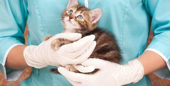 猫から人間に感染する9つの病気と予防法