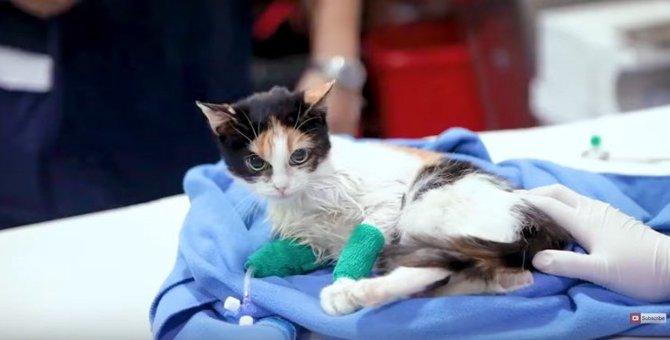 大ケガの猫と呼吸困難な猫…病院で出会い共に幸せな未来へ!