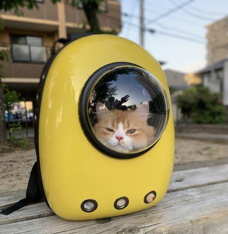 猫のためにしたいキャリーケースの暑さ対策4つ
