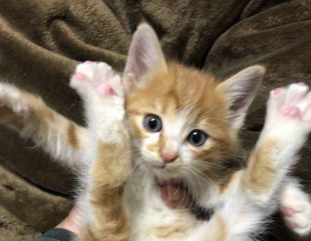 さっきまで遊んでいたのに…猫が『急に固まる』ときの心理3つ