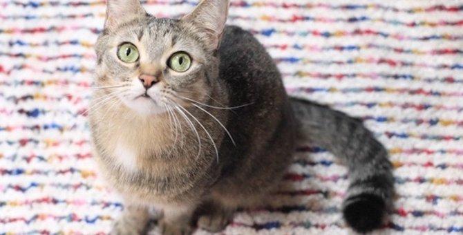 猫が飼い主に助けを求めている時の仕草や行動5つ