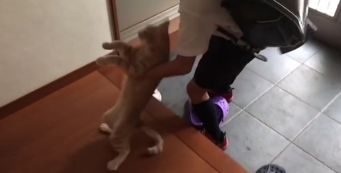 猫ちゃんの外出阻止大作戦!初級者と上級者の違い♪