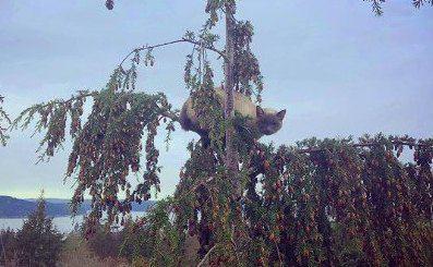 木から降りられなくなった猫を大量救助!2019年は総勢571匹!