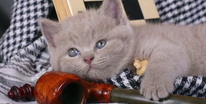 猫の寿命を縮める『三次喫煙』とは