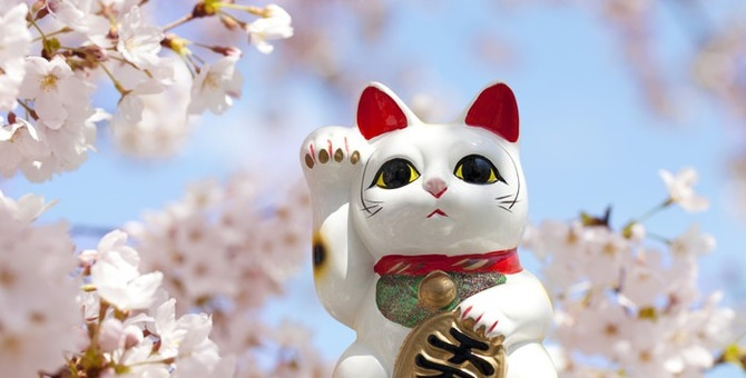 招き猫を飾ってみたい!色やあげている手の違いを解説!