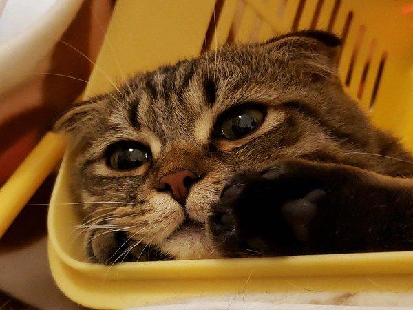 猫のいる部屋で暖房をずっとつけっぱなしでも大丈夫?