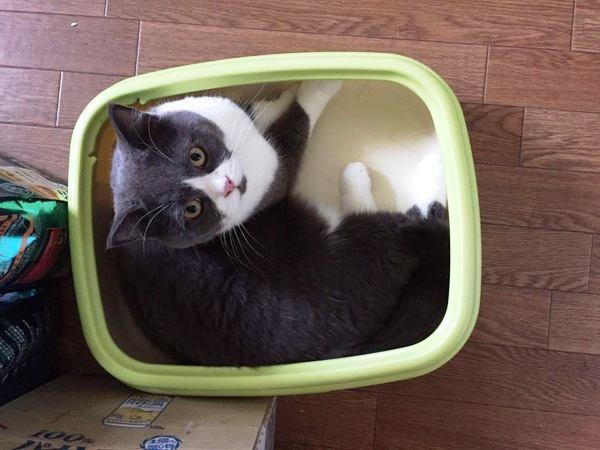 猫のトイレ掃除の適正な頻度は?