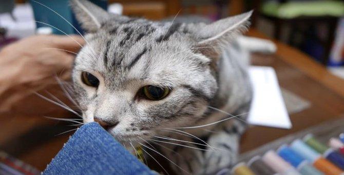 ミシンの音につい、イカ耳になっちゃう猫ちゃん!!