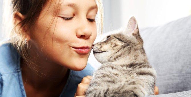 猫が鼻キスをする意味は?どうしたら出来るの?