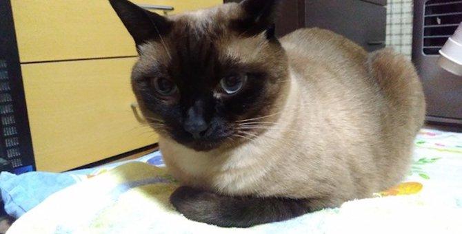 猫が『香箱座り』で眠っているときの心理5つ