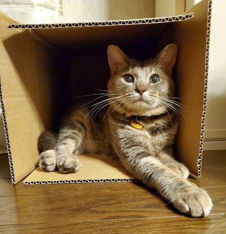 猫が飼い主といるときに空気を読む瞬間5つ