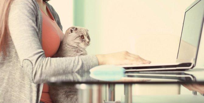 amazonで買える猫用ベッドのおすすめ人気ランキング10選