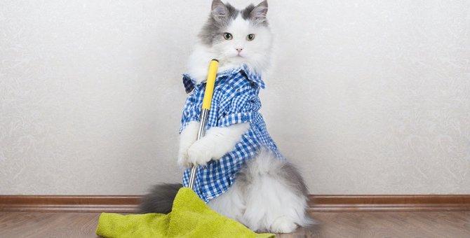 猫の抜け毛取りグッズおすすめ8選!掃除用クリーナーやブラシなど