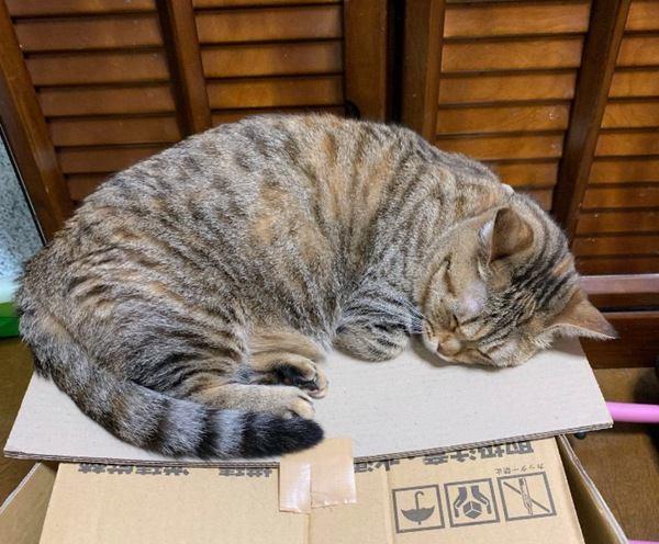 猫の運動不足を予防する方法5つ