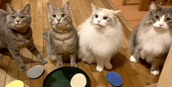 猫が『集会』を開く3つの理由。参加条件や開催時間に迫る!