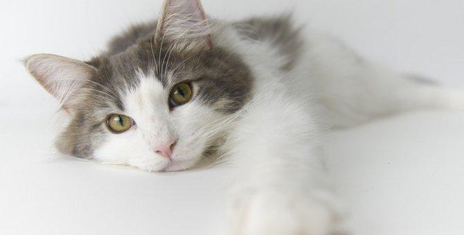 見たらすぐに構ってあげて!猫が寂しいときの鳴き声&仕草4つ