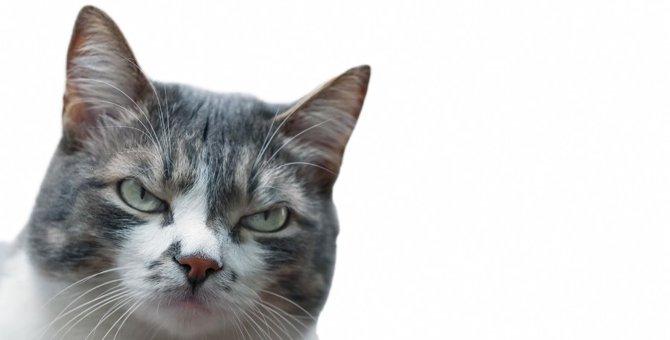 猫が『唸る』のはなぜ?唸り声のパターンでわかる気持ち4選