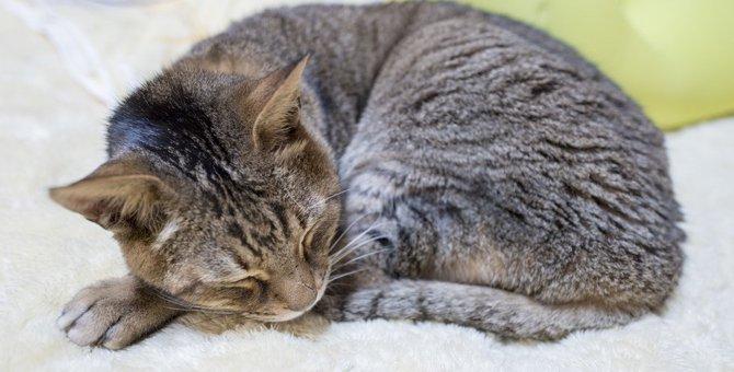 猫の寝相別『隠れ体調不良』診断