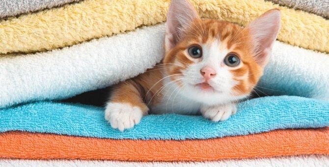 猫の健康に悪影響も!洗濯物の『部屋干し』対策4選