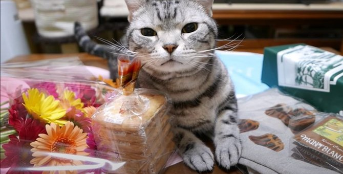 沢山のプレゼントに猫ちゃん大歓喜♡でも実は猫ちゃんへのプレゼントではなかった…