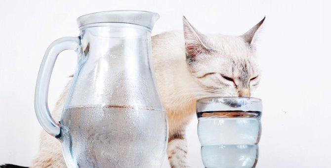 こんな症状が出たら要注意…猫の膀胱炎について